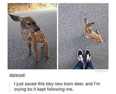 Might I have it I will name it bambi