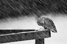 जिस परिंदे को अपनी उड़ान से फुर्सत न थी कभी, आज वो तन्हा हुआ मेरी ही दीवार पे आ बैठा…!!!  Jis Parinde ko Apni Udaan se Fursat Na thi Kabhi,  Aaj Vo Tanha Hua Meri Hi Diwaar Pe Aa Betha…!!!