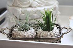 Easy Indoor Garden