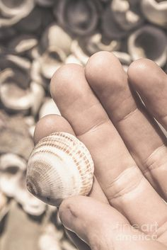 Coastal still life photo on a male hand holding shells on Tasmanian location Shelly Point Beach, Scamander, Tasmania, Australia by Ryan Jorgensen