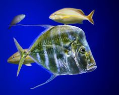 Aquarium Life by Nikolyn McDonald Fishing Uk, Fishing Girls, Fishing Life, Going Fishing, Kayak Fishing, Fishing Boats, Hunting Season, Animals Images, Underwater Photography