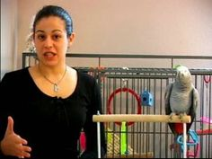 How to Train a Parrot : How to Potty Train a Parrot... Can it be done?