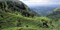 Ceylon Tea Trails, Hatton, Hill Country, Sri Lanka Hotel Reviews   i-escape.com