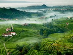 Valdobbiadene, Treviso, Italy - Le colline del Prosecco