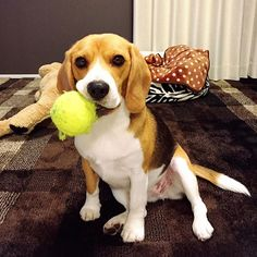 et's play with this ball