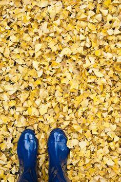 Fall leaves blue rainboots