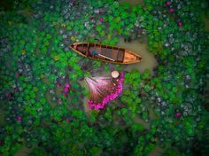 A woman harvests water lilies in Vietnam in this National Geographic Your Shot Photo of the Day. of the day photography Water Lilies Harvest Image Photography 2017, Photography Contests, Aerial Photography, Street Photography, Photography Ideas, National Geographic, Drones, Drone Quadcopter, Fotografia Drone