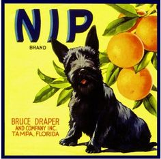 Orange crate label with dog