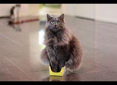 Des positions improbables chez nos amis les bêtes... Découvrez les 18 positions d'animaux les plus insolites du web ! #chien #chat #rongeur #animaux