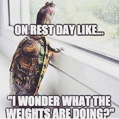 • R E S T D A Y • #sunday #weekend #restday #crossfit #crossfitlife #crossfitmeme #meme #weights #bellandbones #lifeoutsidethebox