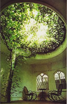 Ficus carica (the plants) makes a breathtaking display of aerial greenery fillin. Ficus carica (th House Ceiling Design, Home Ceiling, Ceiling Windows, Skylight Window, Glass Ceiling, Ceiling Lamps, Ceiling Lighting, Window Sill, Plafond Design