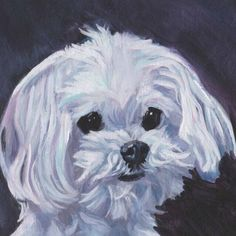 Maltese dog portrait art Canvas PRINT of LAShepard by TheDogLover