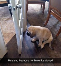 He's sad because he thinks it's closed. --Aww so cute lol Funny Pictures Of The Day - 91 Pics Little Puppies, Cute Puppies, Cute Dogs, Dogs And Puppies, Doggies, Poodle Puppies, Funny Animal Pictures, Cute Pictures, Funny Animals