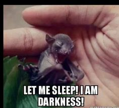 Baby bat says; Let me sleep, I am the darkness! Anyone have a pet bat, not that it would be kind to keep one in a cage. but so darkly cute! Cute Baby Animals, Funny Animals, Coaching, Baby Bats, Cute Bat, Fruit Bat, Funny Animal Pictures, Funny Cute, Funny Shit