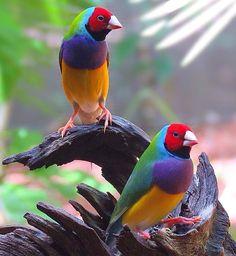 224 Likes, 1 Comments - Nature Pretty Birds, Love Birds, Beautiful Birds, Animals Beautiful, Wildlife Nature, Nature Animals, Animals And Pets, Cute Animals, Tropical Birds