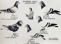 "Raymond Cobut, ""History of the Belgian Racing Pigeons"" 