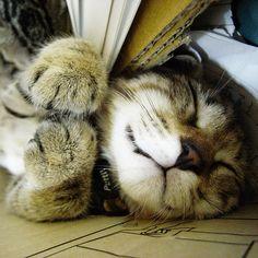 Sweetie.  Cat kitten adorable gorgeous love via Angela Axiarlis