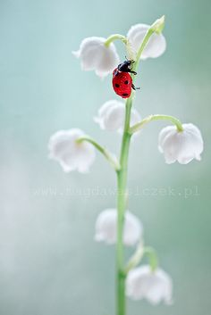 ~~Waiting for spring by Magda Wasiczek Nature and Art Photography~~