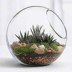 Modern Gardening Modern Garden Idea - This modern spin on the terrarium brings sophistication and nature to any room. Our kit makes creating this natural scene easy and comes with everything needed. Detailed instructions are included. Cactus Terrarium, Terrarium Ideas, Glass Terrarium, Terrarium Scene, Succulents Garden, Planting Flowers, Indoor Succulents, Succulent Gardening, Succulent Planters