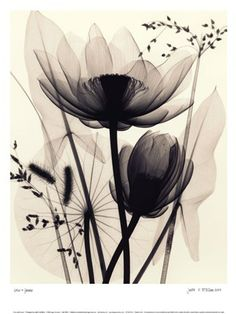 Lotus and Grasses art poster at ArtPosters.com $22