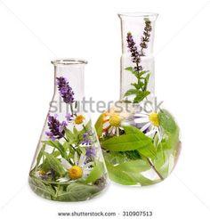 Gratis afbeelding op Pixabay - Verbena, Geneeskrachtige Planten