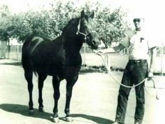 ▶ Poco Bueno - Quarter Horse stallion (1944-1969) - YouTube