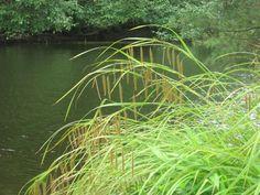 """River Thru Grass"", by Pauline Wilson taken at Mousam River, West Kennebunk, ME"
