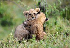 Anche quando ad abbracciarsi sono gli animali la dolcezza sembra non avere confini.