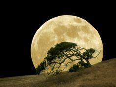 Windswept Live Oak Tree and Rising Full Moon at Night Photographic Print by Diane Miller at Art.com