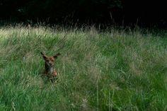 Rabbit or Lanai?