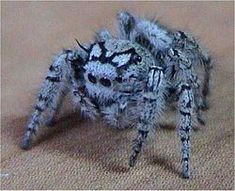 Spiders! - Page 2 - AnandTech Forums