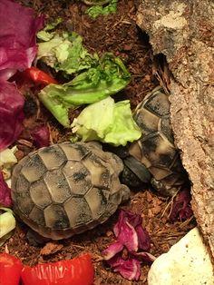 Love turtles baby ❣️