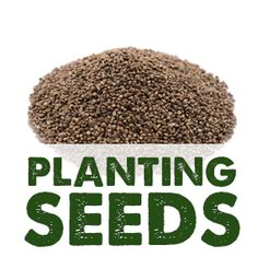 Enjoy the nourishing benefits of these raw whole viable hemp seeds for many applications. Hemp Seeds, Propagation, Planting Seeds, Warehouse, A Food, Grains, Plants, Seed Starting, Magazine