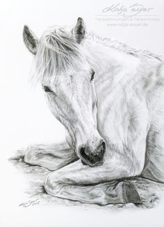 Pferdezeichnungen und Pferdeportraits in Pastellkreide und Kohle - Auftragsarbeiten: www.katja-sauer.de Tierportraits und Tierzeichnungen Horse paintings and horse portraits in soft pastels and charcoal - commissioned works: www.katja-sauer.de Animal paintings and animal portraits