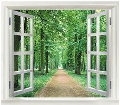 3D Window Green View Flowers Plant Floral Forrest Wall by WallOR