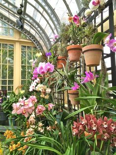 1000 Images About Greenhouse Dreams On Pinterest