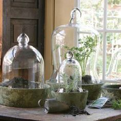 Indoor Gardening Quick, Clean Up, And Pesticide Free - Make Your Own Plants In Glass Domes Glass Bell Jar, The Bell Jar, Glass Domes, Glass Jars, Bell Jars, Garden Cloche, Garden Terrarium, Terrariums, Plant In Glass
