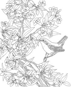 Nature Coloring Pages For Adults | Coloring Pages of Backyard Birds
