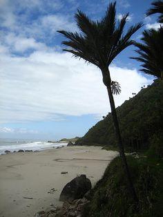 20 minute beach, Heaphy Track