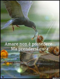 Amare non è possedere Mood Quotes, Life Quotes, Favorite Quotes, Best Quotes, Quotes About Everything, Italian Language, My Mood, Love Words, True Love