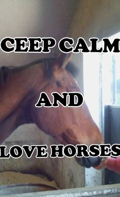 Ceep calm and love horses! #trots op million