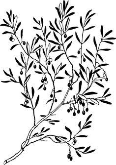Olive Tree Branch Tattoo