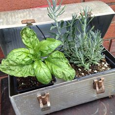 Sometimes you have to think beyond conventional uses for items. Great idea to use an old round top industrial lunch box for display of small herb plants. Yellow Door Goods Cleveland.