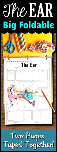 The big ear foldable consists of two pages taped together.  There is minimal cutting involved to save you class time while providing an engaging foldable for your students to use.  When the descriptions of the parts are complete, it will make a perfect graphic organizer for review.  Students can also color in the parts of the ear for more reinforcement.  When folded in half, this foldable fits perfectly into any binder or interactive notebook.