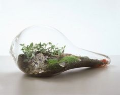 10 Cool Tabletop Terrariums | Shelterness