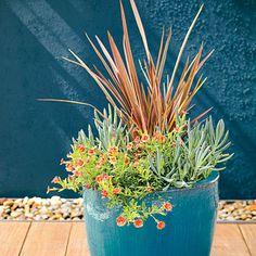 Phormium 'Maori Queen' and Blue Chalksticks - Drought Tolerant Container Plants  Sunset