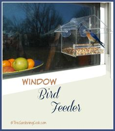 Window Bird Feeder - Easy To Use Nature Review