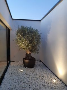 patio with olive tree Gartengestaltung Work — Ai&M Side Garden, Terrace Garden, Balcony Gardening, Olivier En Pot, Indoor Courtyard, Casa Patio, Interior Design Photos, Interior Garden, Interior Office