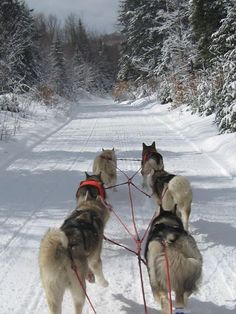 NEW HAMPSHIRE Is Offering Expanded Sled Dog Tours That Explore the Woods and White Mountains. Photo: Valley Snow Dogz / SF