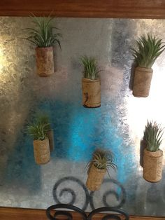 Wine cork air plants that we carry.